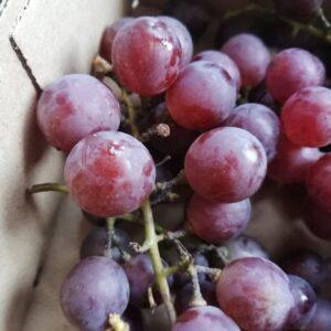 """Winogron """" Reliance"""" Różowo-czerwone owoce c2 30-40cm"""