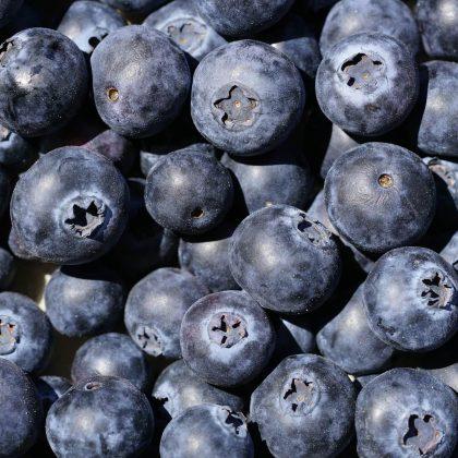 blueberries-4333033_1920