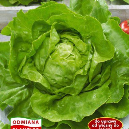 salata bona-ZIEL-456-14.qxp